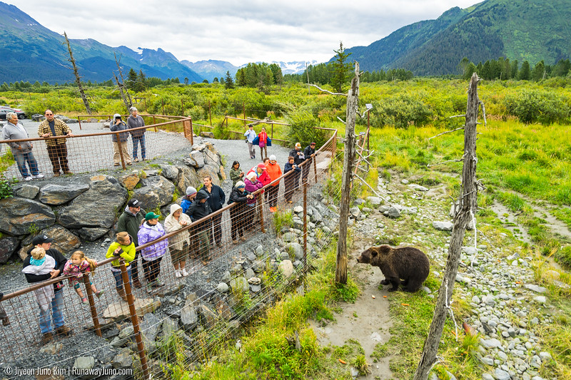 Alaska Wildlife Conservation Center-8126.jpg