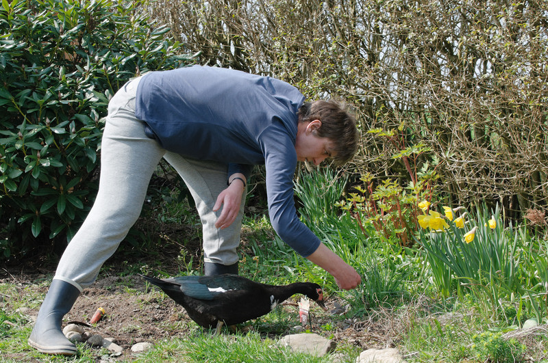 Das Wetter wurde schöner und Helga fing an, den Garten zu machen. Unsere Ente war immer in der Nähe, um die Würmer zu essen, die Helga aufgescheucht hat.