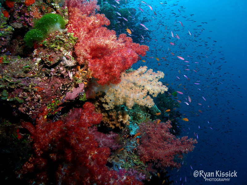 Exquisite soft coral