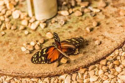 Butterflies in Flight 2018 - Set 2