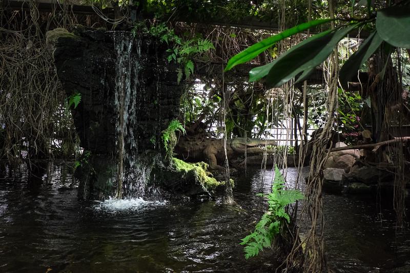 Tropical Scene