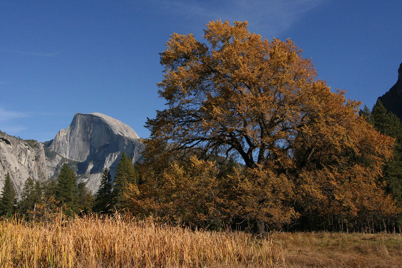 The Valley Floor and Half Dome