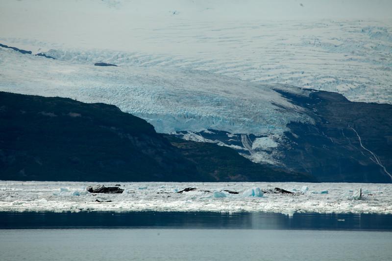 Alaska Icy Bay-4080.jpg