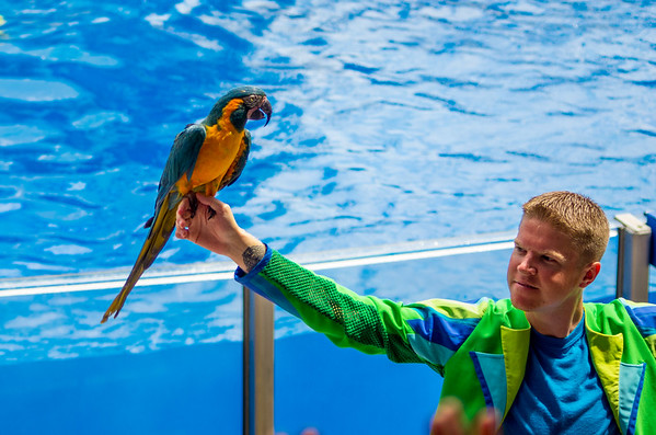 Orlando - SeaWorld 2012