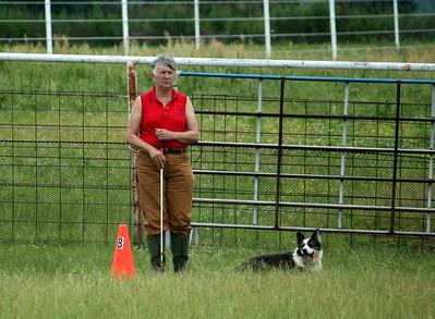 AHBA Herding Trial June 2017