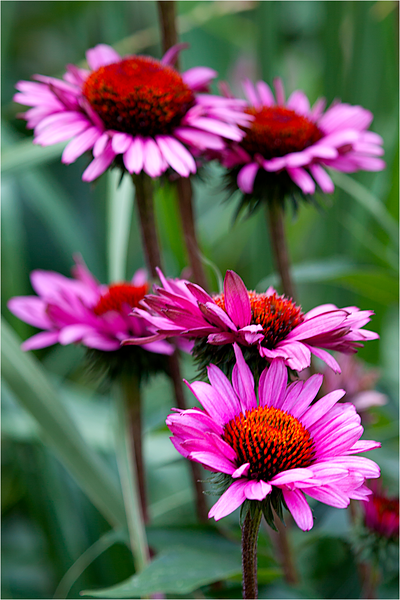 20120713_Flower_04.png
