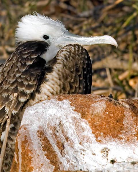 Albatrossbrock107-(2).jpg