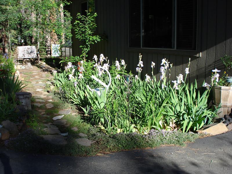 Front Garden 07-05-2010