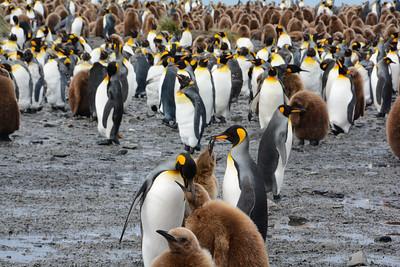 The Falkland and South Georgia Islands Part 2