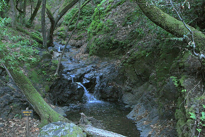 FOMFOK - Uvas Canyon County Park