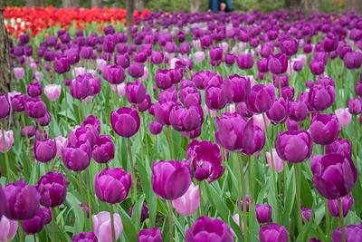 Garvin Gardens (March 23)