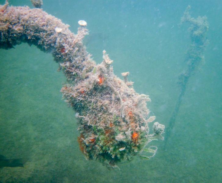 snorkeling the sunken anchor