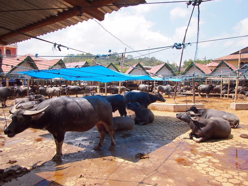 P9048789-bolu-buffalo-market.JPG