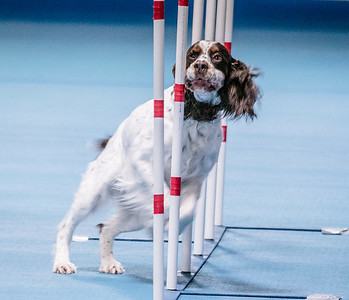 SDTC Agility Trial - Sunday, Nov. 15, 2015