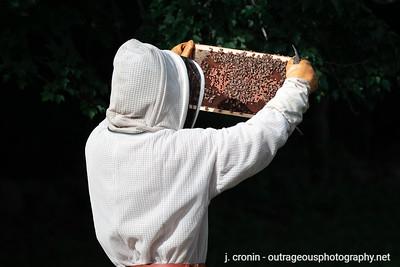 Drew's Honeybees 2020