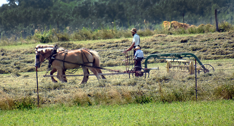 02 Amish father teaching son field work-Roper.jpg
