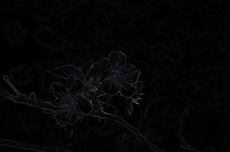 IMGP6330-Edit-2.jpg