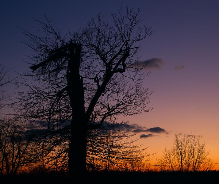 Tree Sunset-.jpg