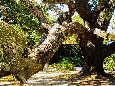 Trees & Wood
