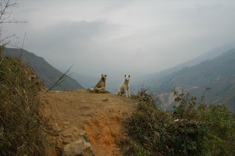 Dogs on the Mountain - Sapa, Vietnam
