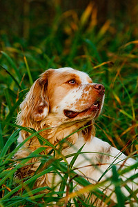 December 7th  All Aged Spaniel Stake Minor Breeds