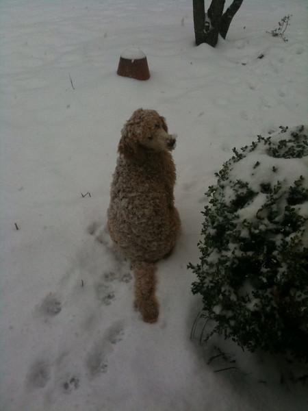 Winnie waiting on the snow...