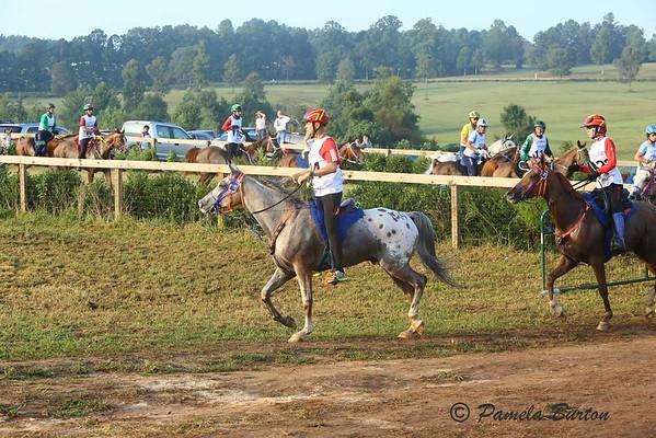 2018 World EquestrianGamesEndurance