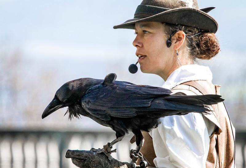 Raven - Kohkrabe