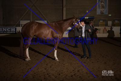 2YO Stallions Open