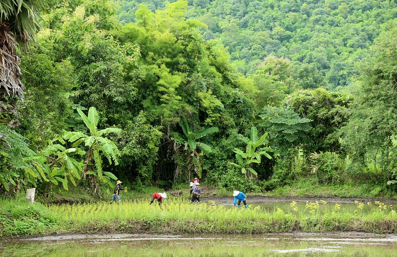 IMG_8973_rice planting_8x12x300.jpg