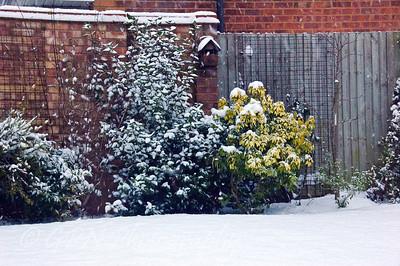A Snowy Day - Feb 2009