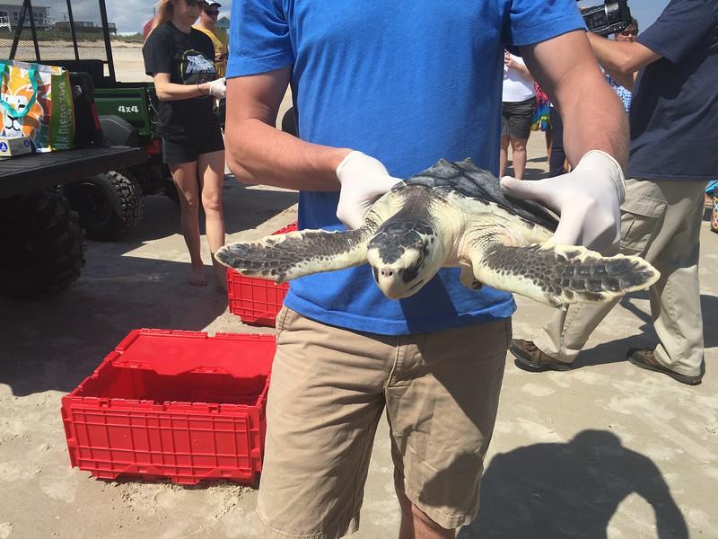 Sea Turtle Rescue.jpg