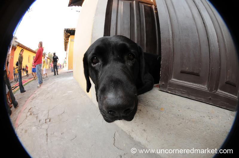Cute Black Dog - Antigua, Guatemala