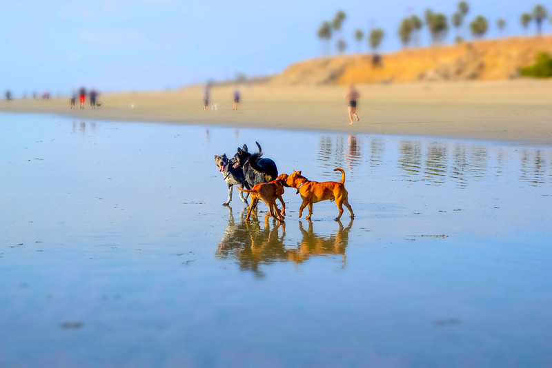 dogs_beach-14.jpg