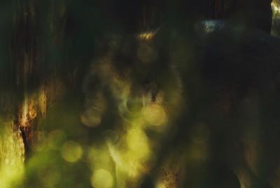 Portrait of a hidden wolf