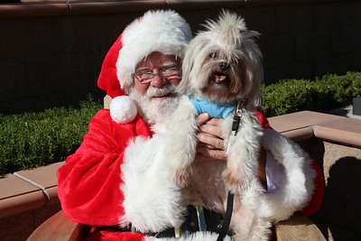 Home for the Pawlidays & Pet Santa with NSPCA