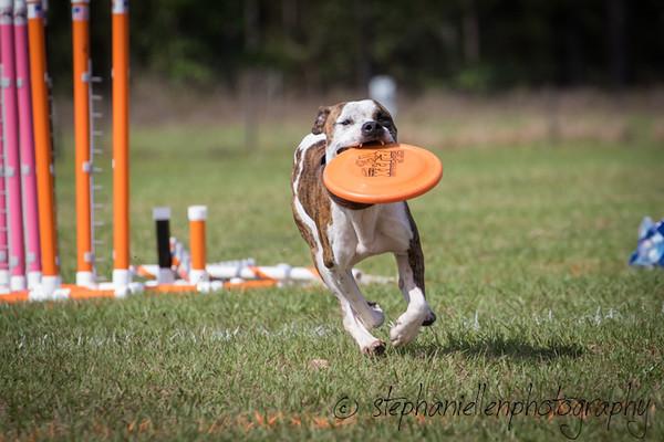 _MG_3353Up_dog_International_2016_StephaniellenPhotography.jpg