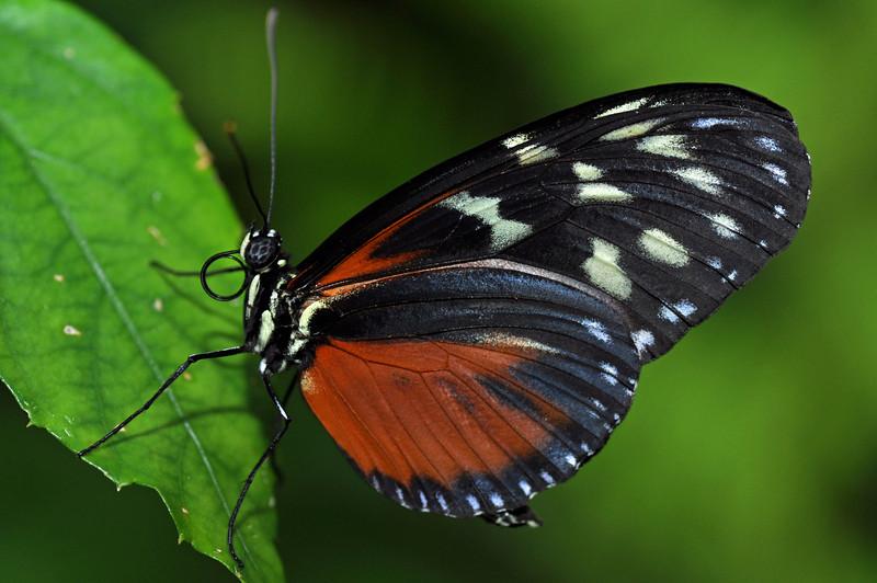 orangeblackwhite2.jpg