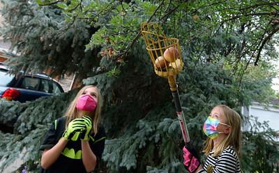 Photos: Community Fruit Rescue on October 6, 2021.