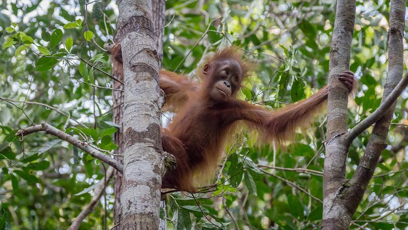 Borneo-2285.jpg
