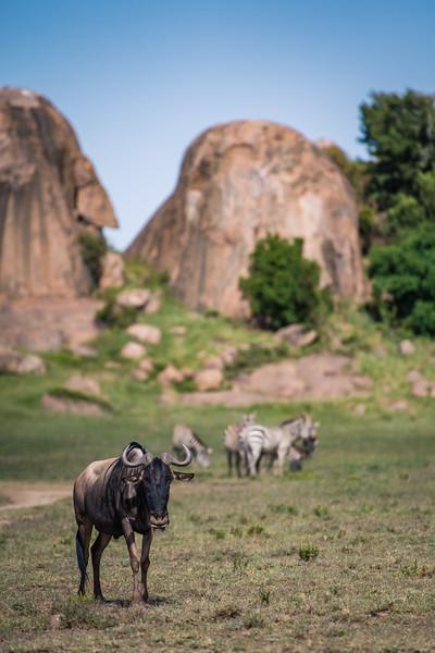 Tanzania_Feb_2018-511.jpg