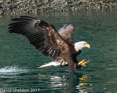 Alaska Eagles 2016