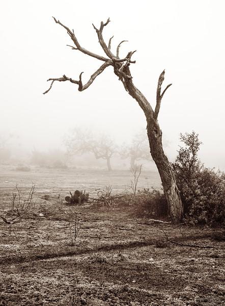2009-12-13 Lone tree in Fog black and white 1046 C.jpg