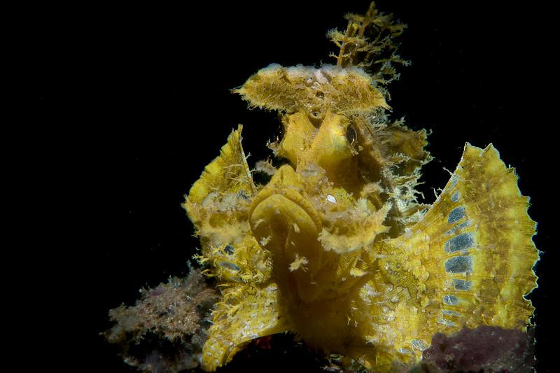 R frondosa-yellow_2 (1 of 1).jpg
