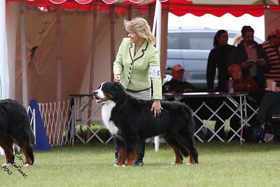 Winners Dog BMDCA 2010