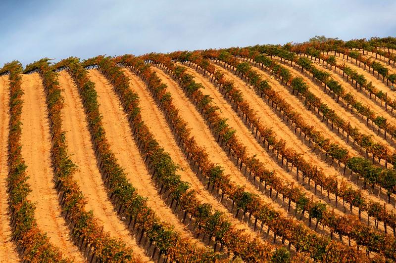 Paso Vineyards-9.jpg