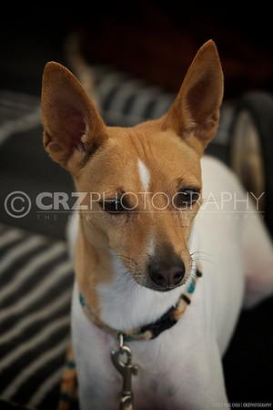 2011 Woodland Dog Show