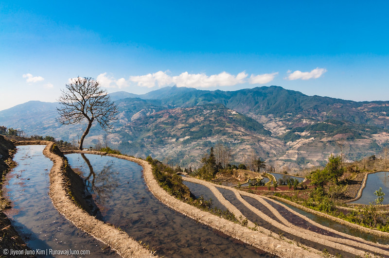 Rice Terraces-5038.jpg