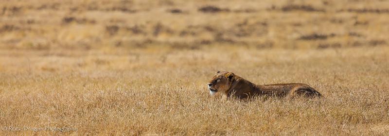 Ngorongoro-13.jpg