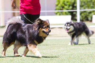 Sunday Dog Show